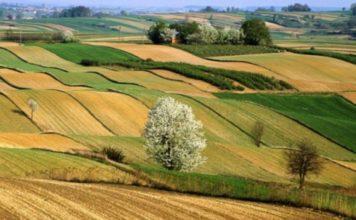 Aumentano in Umbria i giovani imprenditori agricoli