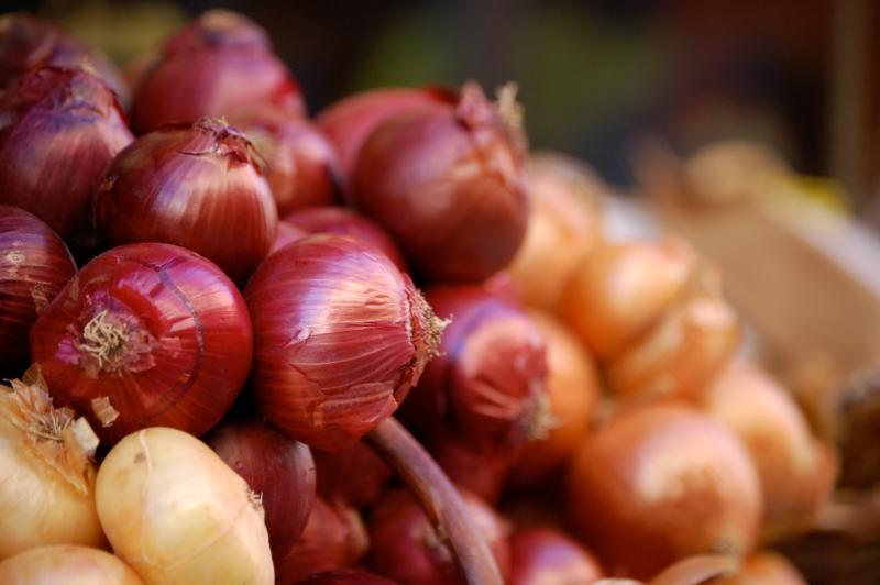 Si apre a Cannara la 38^ edizione della Festa della Cipolla