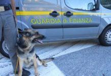 La Guardia di Finanza recupera 200 grammi di hascisc, un arresto