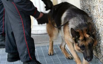 Il cane Batman fiuta la cocaina: scatta l'arresto