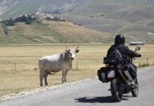"""Allevatore di Castelluccio: """"Dove sono i caseifici?"""""""