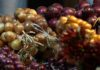 Ultimo week-end per la 37^ Festa della Cipolla