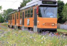I fiori di Castelluccio nelle grandi città metropolitane