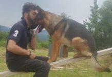 Morto avvelenato il cane-eroe di Amatrice Kaos